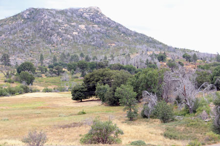 Fire-damaged area of Cuyamaca Rancho State Park in August 2012.