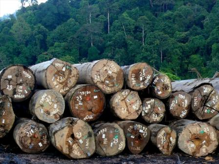 Logging in Indonesia
