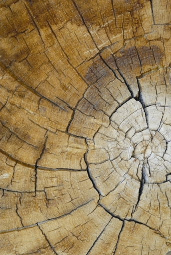 Can scientists use radiocarbon dating to find the age of a very tall old redwood tree