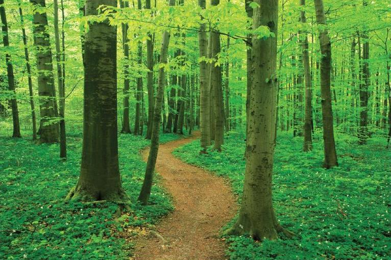 A Tree Lined Path To Good Health American Forests