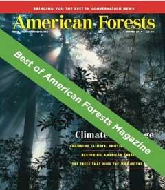 Best Of Banner_Best Of AF Mag banner