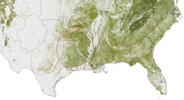 Texas forest cover