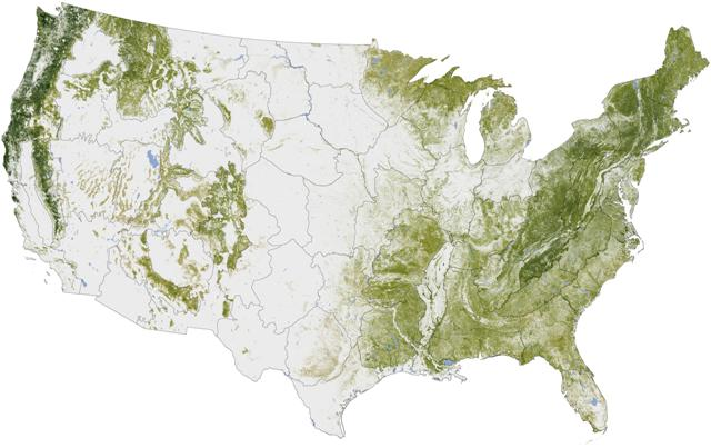 US Forest Cover