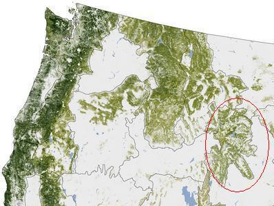 Wyoming forest cover