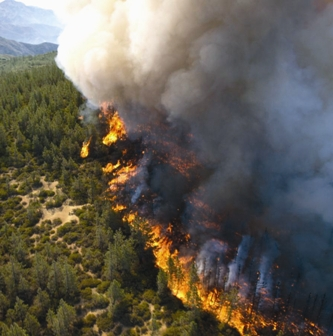 Wildfire raging across a California forest