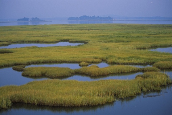 Coastal wetlands at Parker River National Wildlife Refuge in Massachusetts