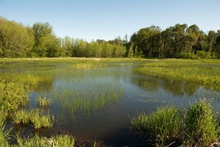 Wetlands in William L. Finley National Wildlife Refuge