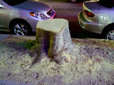Remains of a tree along Colorado Boulevard in Pasadena, California