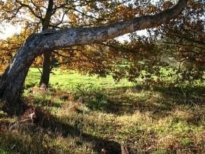Native American tree marker
