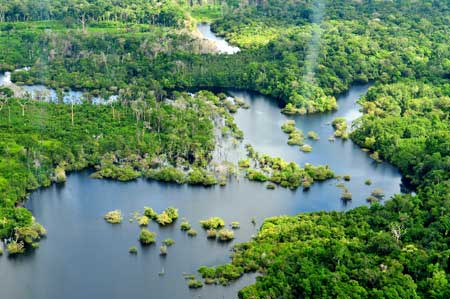 Amazon rainforest, near Manaus, Brazil