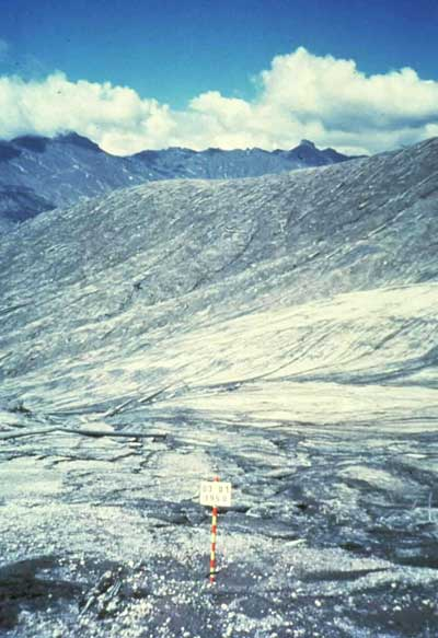 As shown in this photo taken after the eruption (use the sign as a comparison point between the two photos), Mount St. Helens' eruption destroyed the old-growth forest.