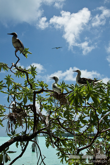 Birds on Palmyra Atoll