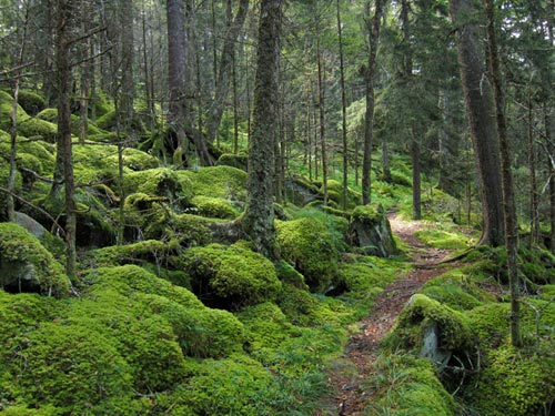 Baxter Creek Trail, Great Smoky Mountains National Park