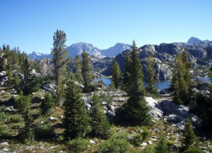 American Forests is actively restoring these endangered western forests. Copyright GYCC