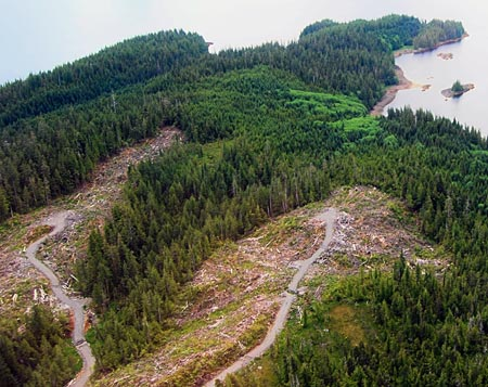 Clear-cuts in Alaska's forests