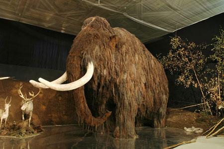 Mammoth in Prague's National Museum