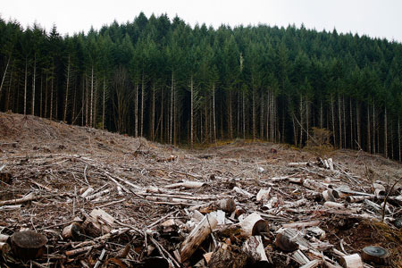 Clear-cut forest in Oregon