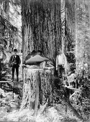 Loggers in Oregon in 1905