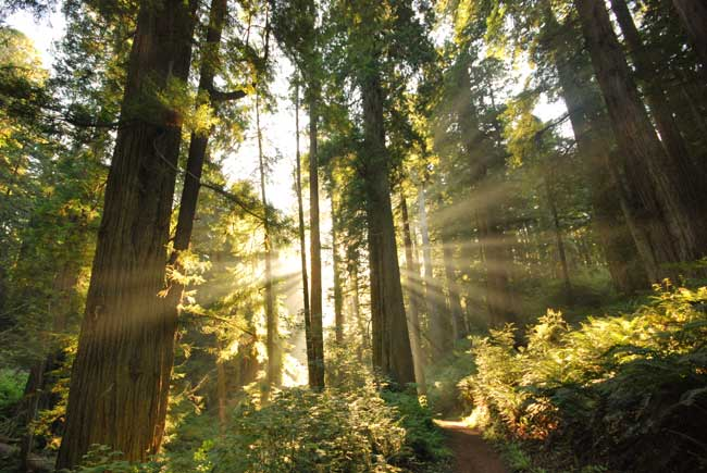 A Legacy Of Service American Forests