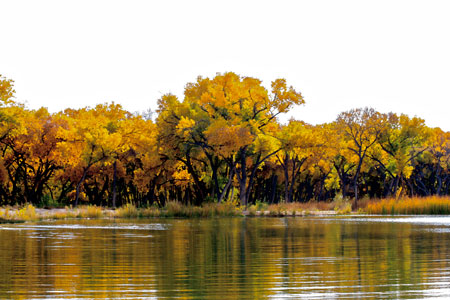 The Rio Grande bosque