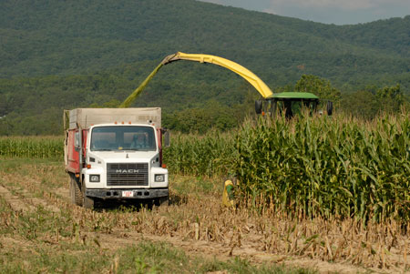 Corn is harvested on a farm in Augusta County, Virginia, in 2008