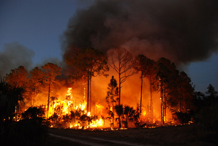 Prescribed burn at Florida Panther National Wildlife Refuge