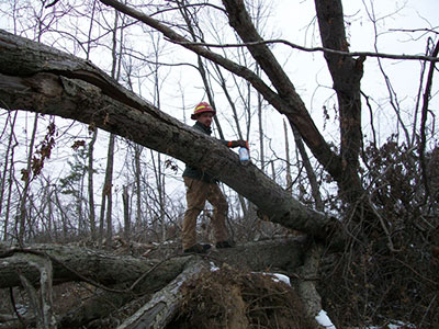 Anthony Lee marks storm-damaged timber in Missouri's Mark Twain National Forest