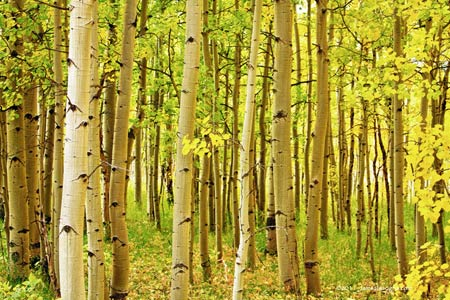 Aspen in Colorado