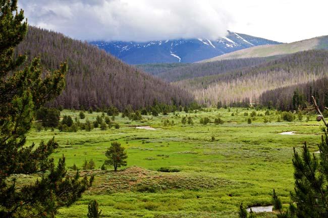 Colorado Bark Beetle Damage - American Forests Magazine Autumn 2012