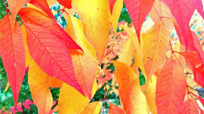 Foliage at Portland's Hoyt Arboretum