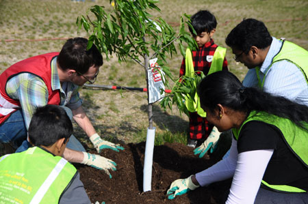 Tree planting event at Bruce-Monroe Elementary School hosted by Casey Trees