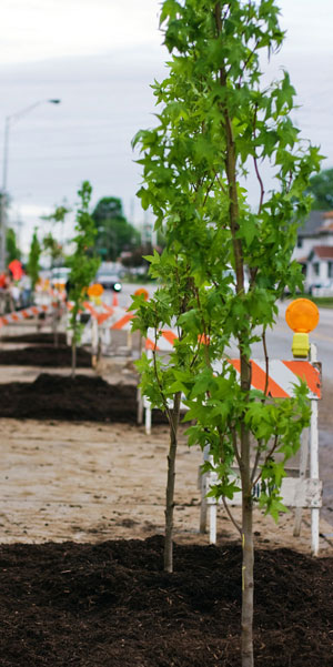 Irvington Tree Planting. Credit: Keep Indianapolis Beautiful