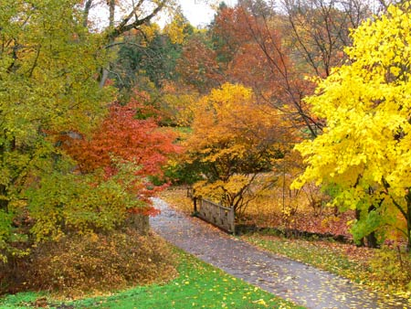 Fall foliage at Philadelphia's Morris Arboretum