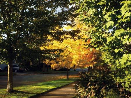 Portland street trees