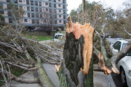 Fallen tree in Queens, New York