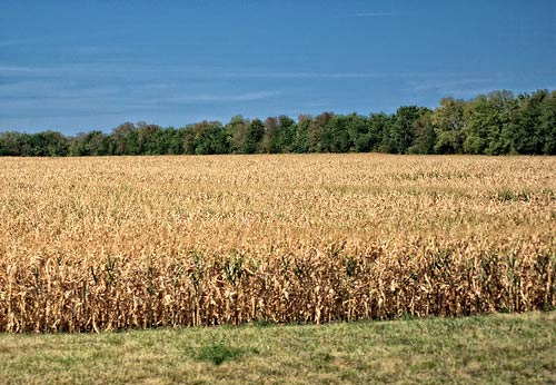 The drought of 2012 was one of the Midwest's worst.