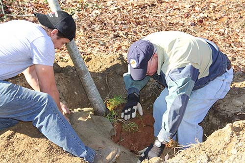 American Forests volunteer helps Arlington County employee with tree-planting.