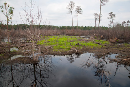 By pushing an earthen plug into the ditch, the drainage stops and water backs up, creating a natural wetlands area on Maryland Eastern shore landowner Kirby Wells' property on June 19, 2012, as part of the WRP