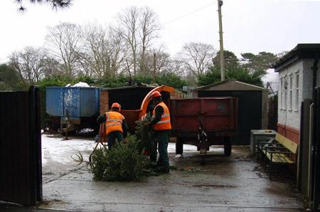 Mulching Christmas trees