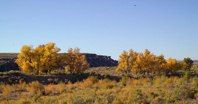 In the fall, cottonwood turn golden along the Puerco River in Petrified Forest National Park.