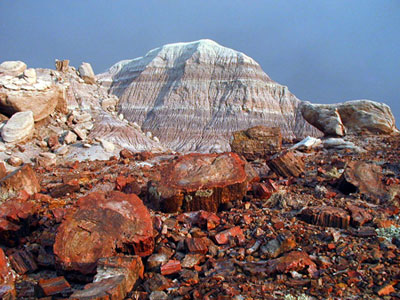 Striped badlands contrast with the colorful petrified wood at Petrified Forest National Park