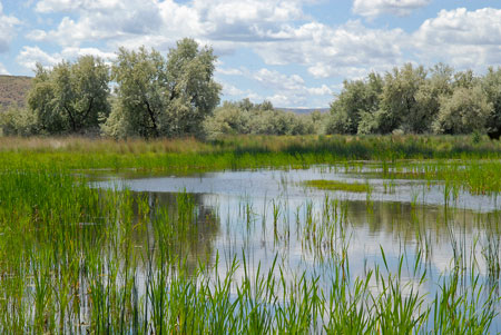 A wetland in central Washington that has been restored through NRCS cooperative work