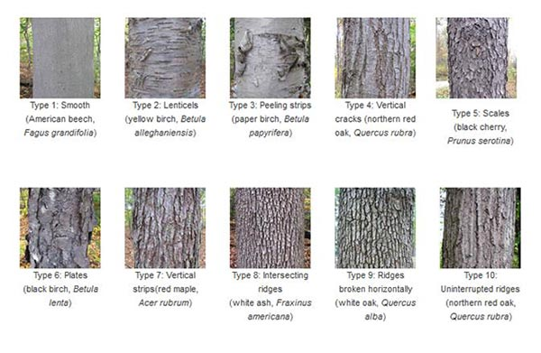 The Language of Bark American Forests