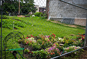 Barclay residents in Baltimore work together to create and maintain gardens and greenspaces