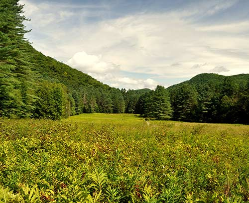 Mohawk Trail State Forest. Credit: Tom Zelazo.
