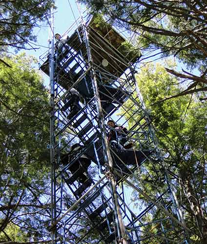 70-foot hemlock canopy access tower