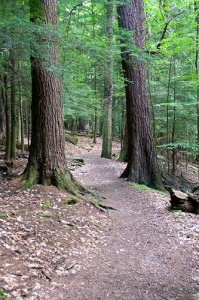The towering white pines and hemlocks in Forest Cathedral make it a national natural landmark.