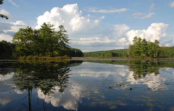 Harvard Pond in Harvard Forest.