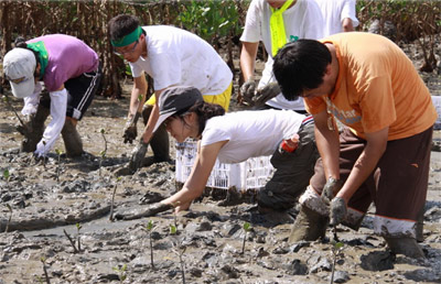 Volunteers planting mangroves on Dayu Island, China