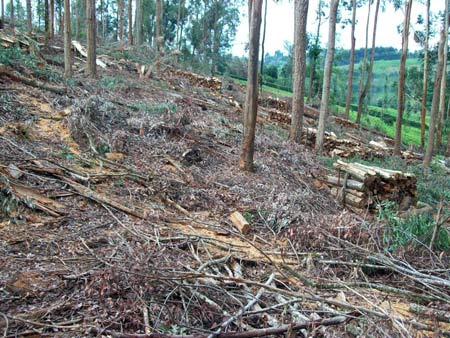 Deforestation on the slopes of Mount Kenya, Embu District, Kenya